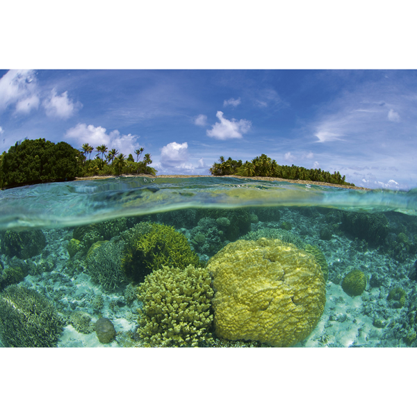 Picture of Coral Reef Wall Mural