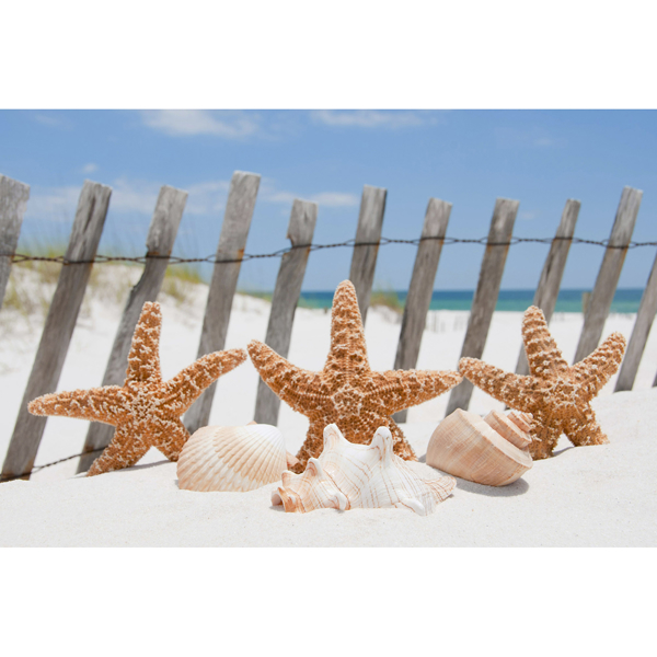 Picture of Starfish Wall Mural