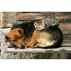 Picture of Cat and Dog Wall Mural
