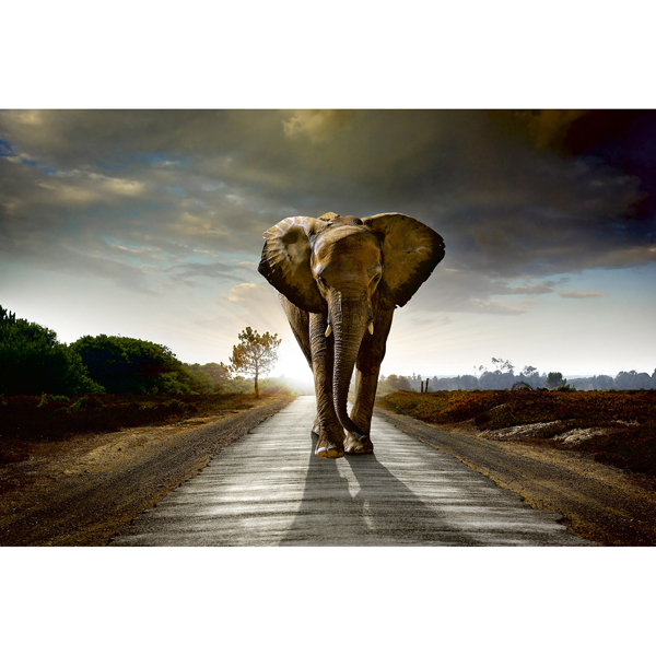 Picture of Walking Elephant Wall Mural