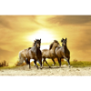 Picture of Horses in Sunset Wall Mural