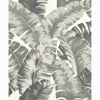 Picture of Pisang Sage Palm Leaf Wallpaper