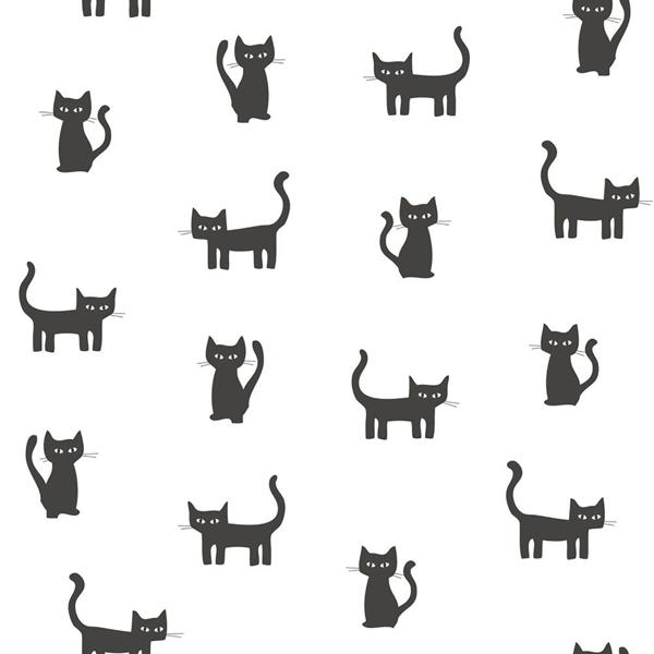 Picture of Salem Black Kittens Wallpaper