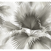 Picture of Summer Palm Charcoal Tropical Wallpaper
