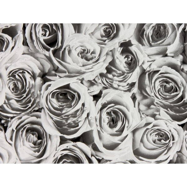 Picture of Roses White Grey Adhesive Film