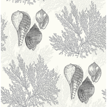 Picture of Nauset Black Seashell Shores Wallpaper