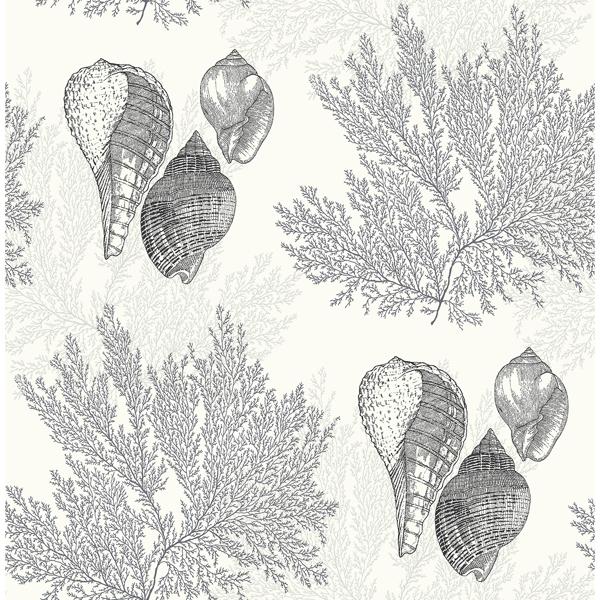 Picture of Nauset Black Seashell Shores Wallpaper