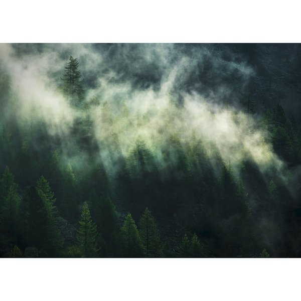 Picture of Misty Crowns Wall Mural