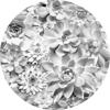 Picture of Echeveria Non Woven Dot Decal