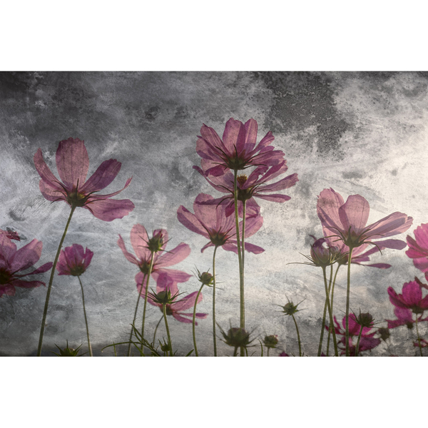 Picture of Violet Flower Abstract Wall Mural