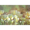 Picture of White Tulips Abstract Wall Mural